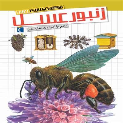 شگفتی های جهان   زنبور عسل